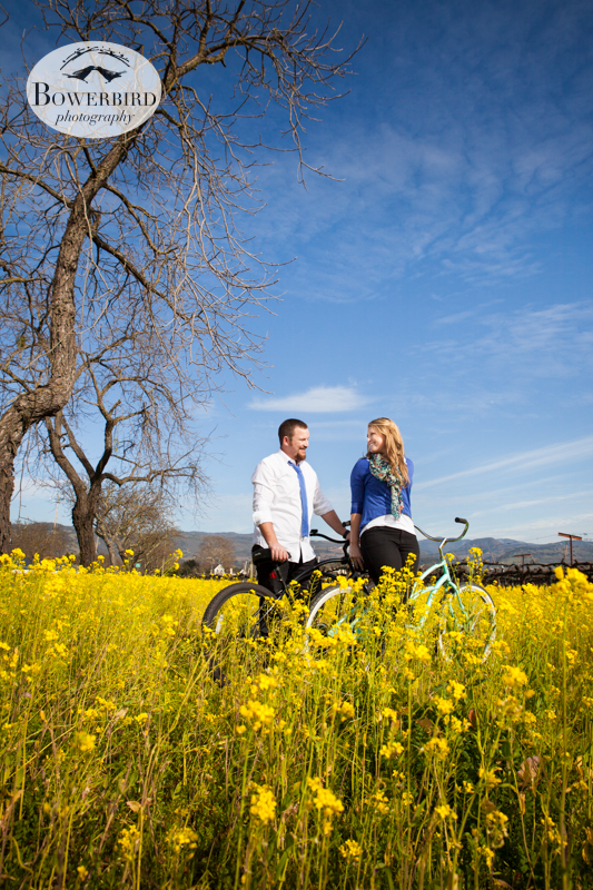 Getting ready for a ride through the yellow mustard flowers. © Bowerbird Photography 2013; Engagement Photography in Napa Valley, CA.