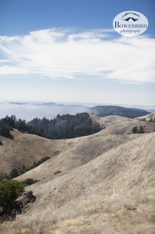 Mt. Tam. © Bowerbird Photography 2013.