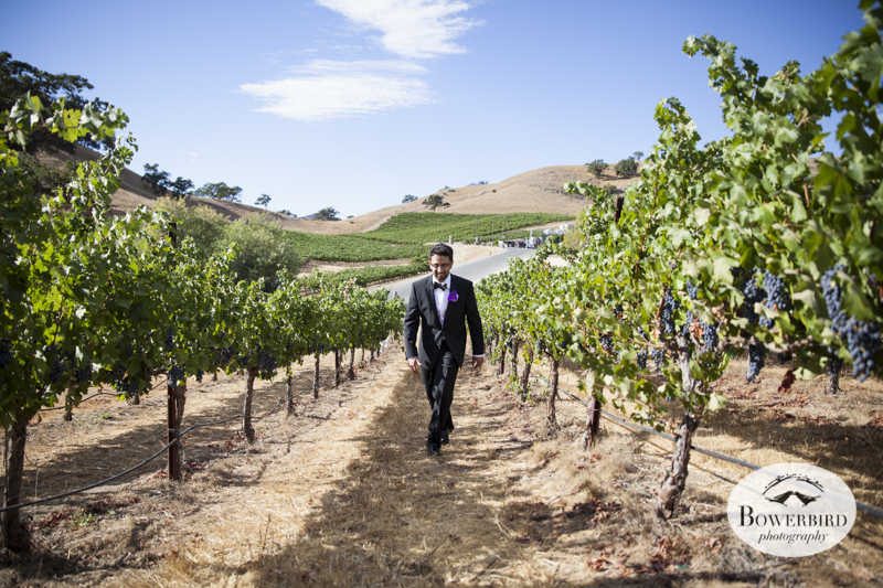 Clos LaChance Winery Wedding Photography. © Bowerbird Photography 2013.