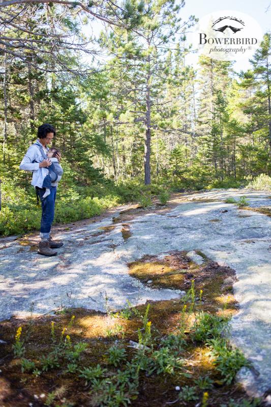 Wonderland Trail, Acadia National Park.Traveling with baby in Acadia National Park, Mt. Desert Island, Bar Harbor, Maine.© Bowerbird Photography 2016
