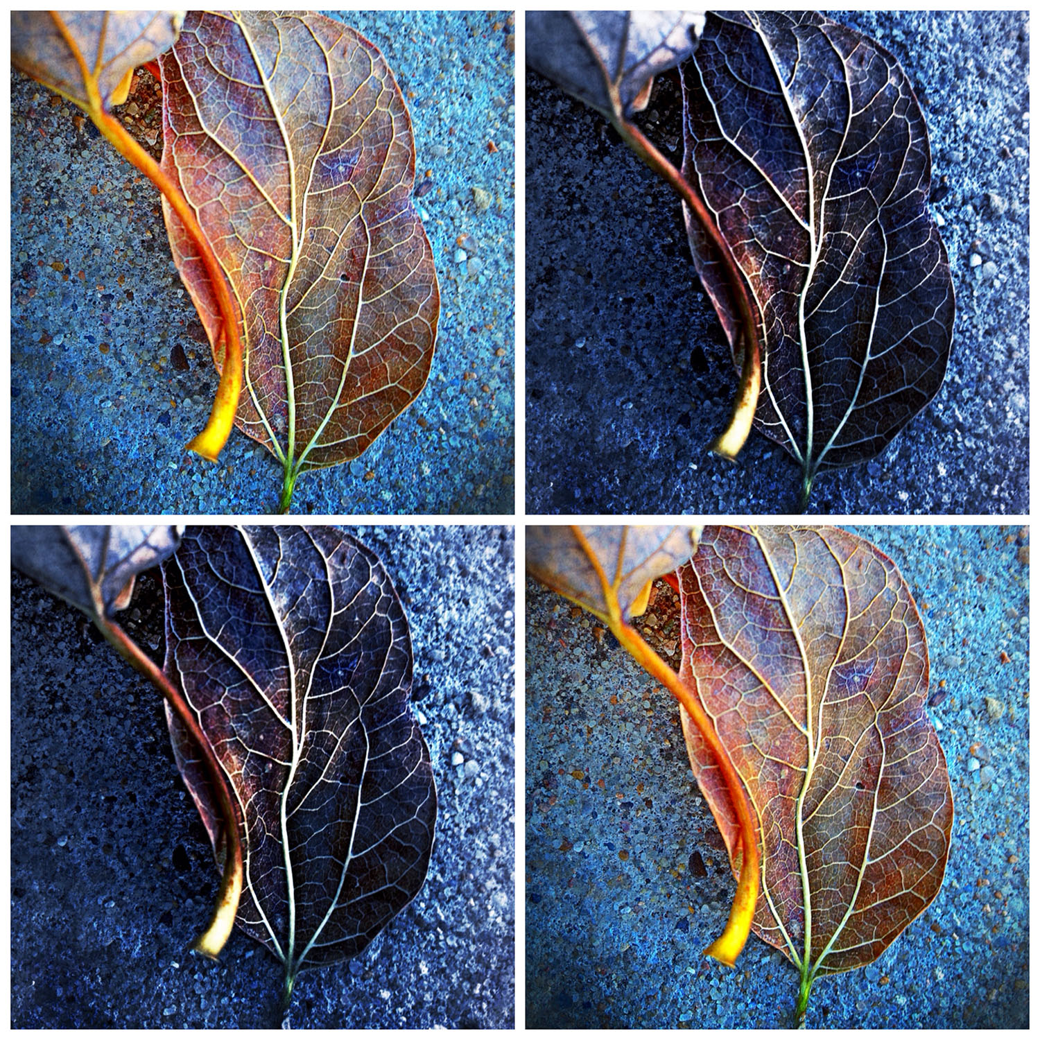Image from evening walk in late November.