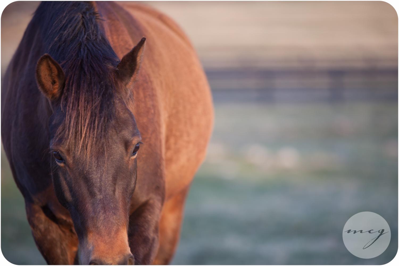 Charleston SC Equine Photography