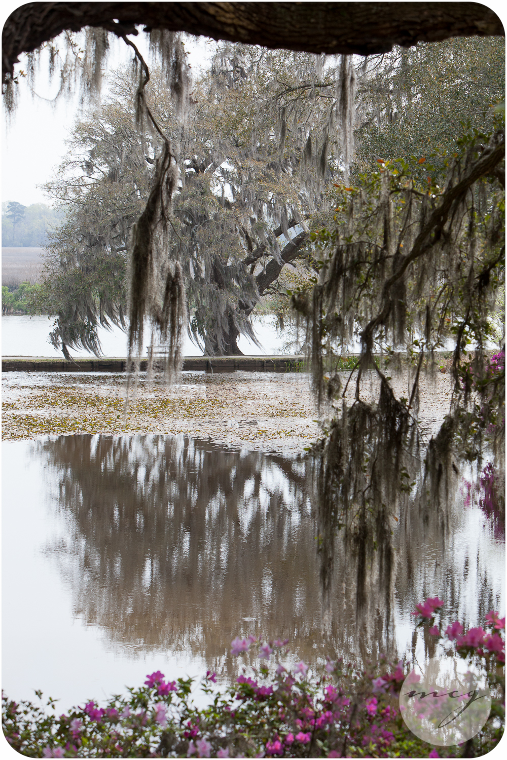 Middleton Place Images