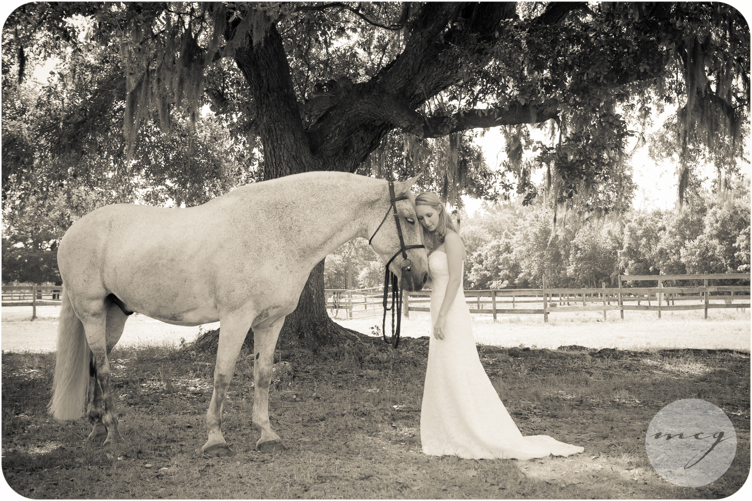 Johns Island South Carolina horse photographer