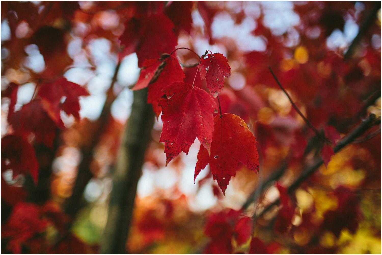 Beautiful nature! Cleveland Engagement Photographer