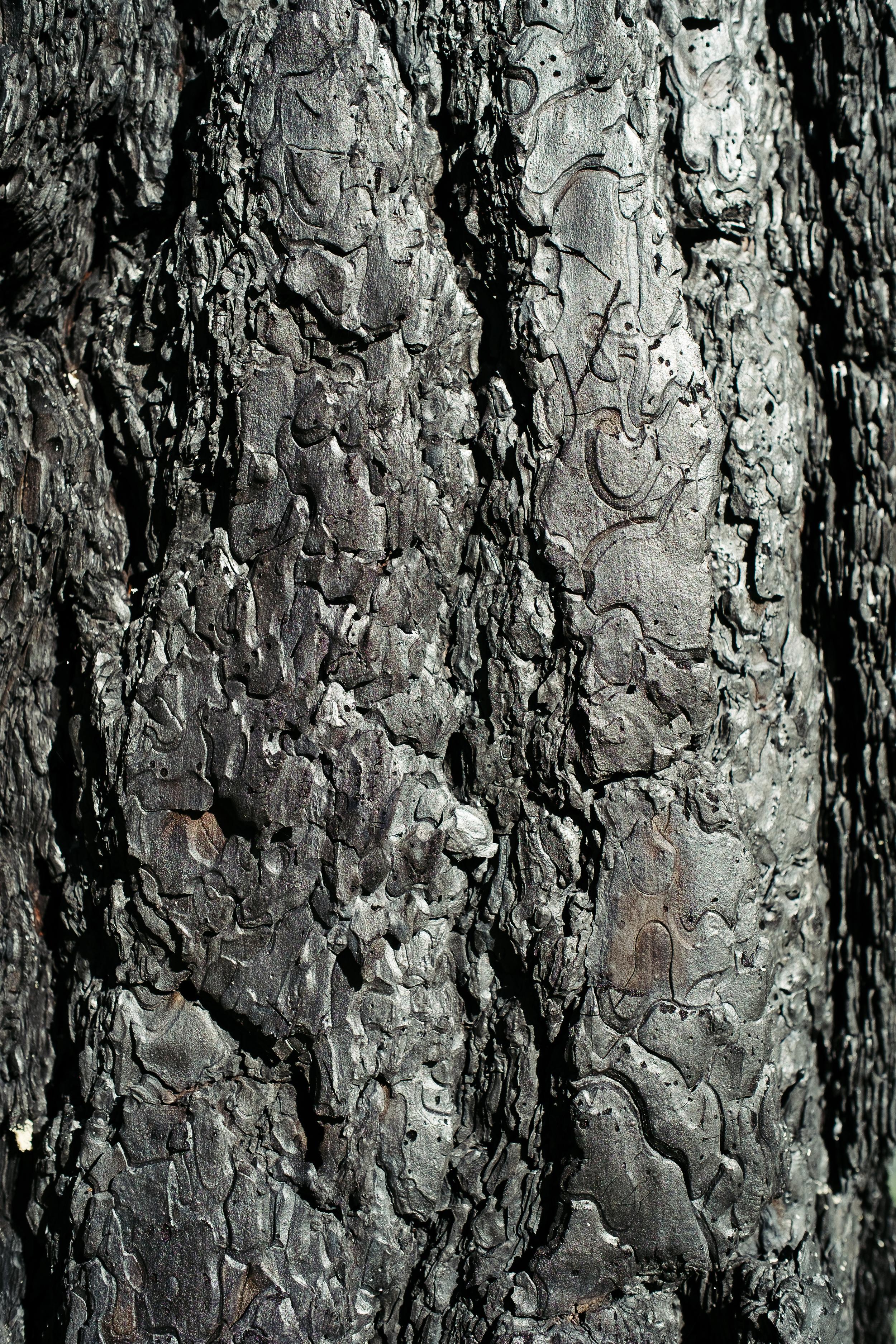 Burned Bark.