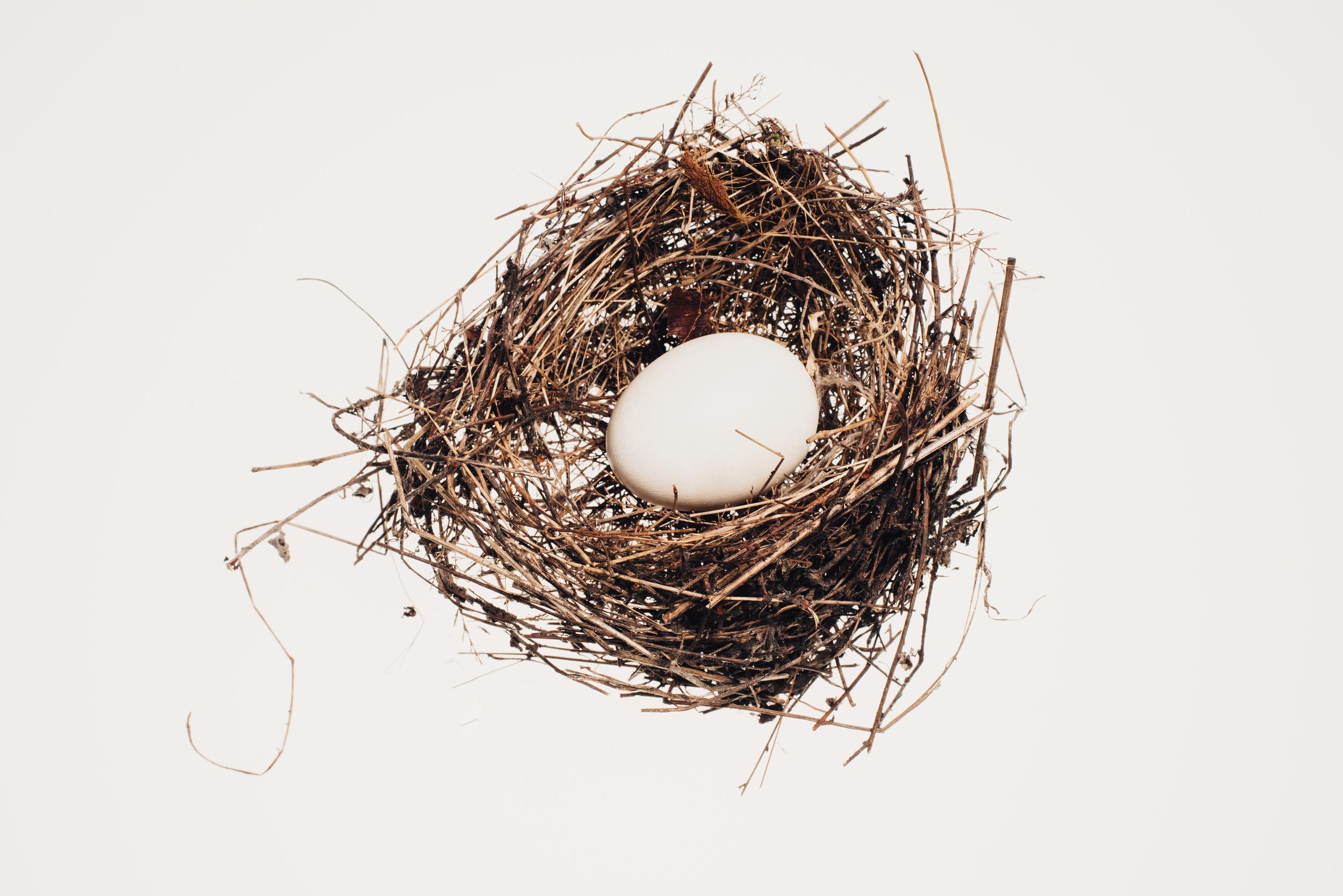 Bird_Nests-0017-2.jpg