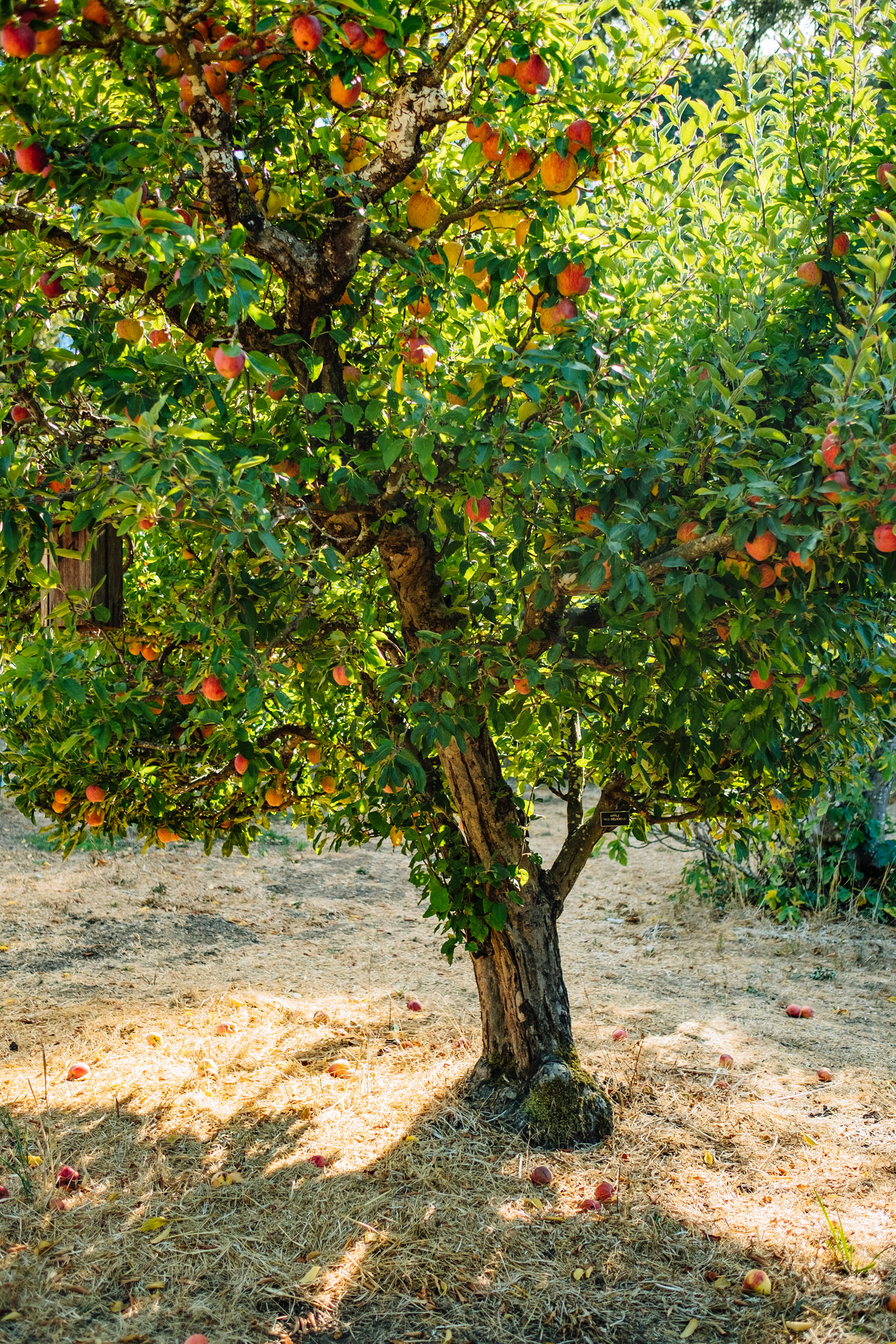 Orchards_Lucas_Saugen_Filoli-0546.jpg