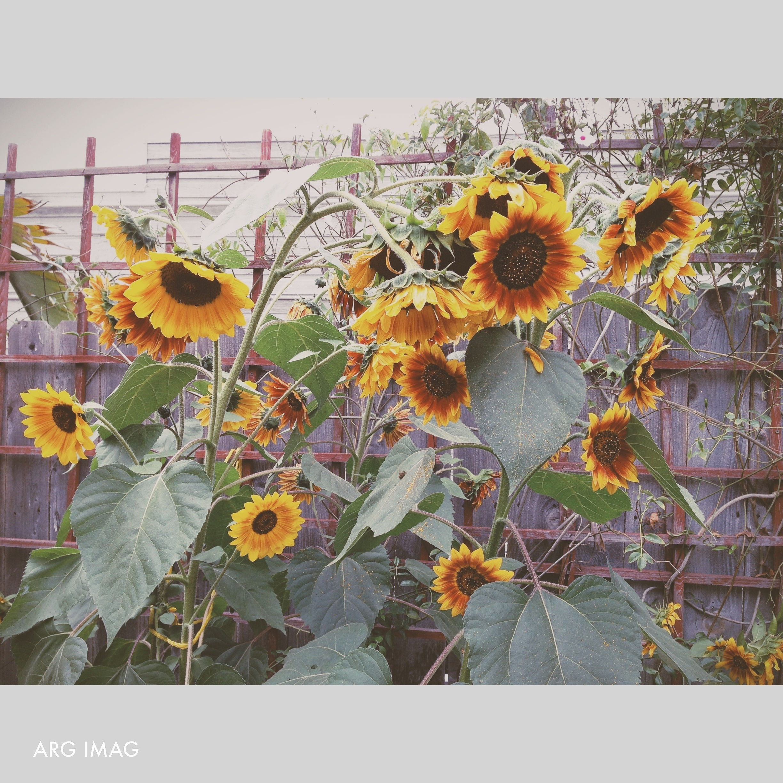 Top August 2013 ARG IMAG Photography Instagram (12).jpg