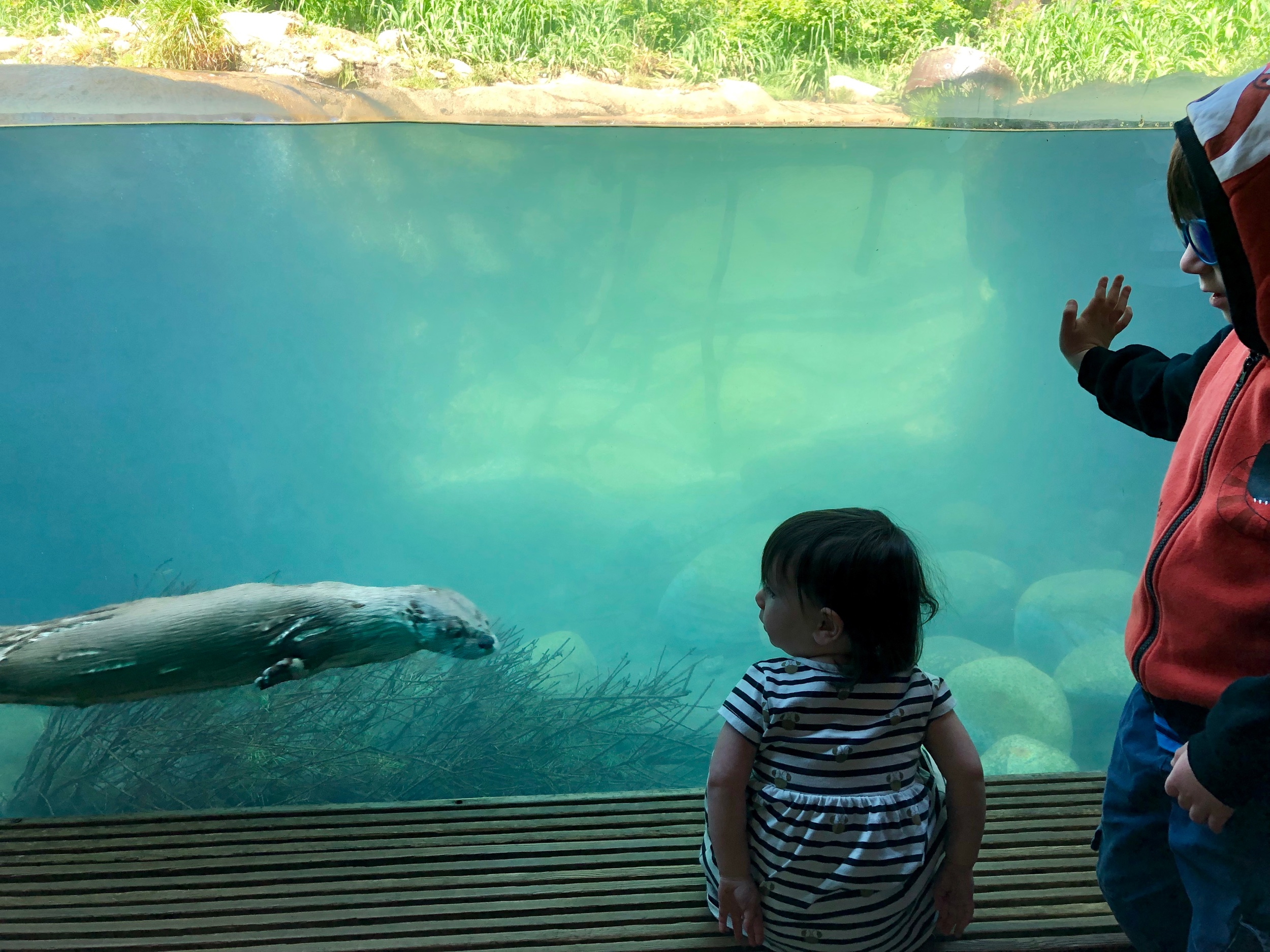 Thea and Oliver watch a river otter at the Woodland Zoo in Seattle.