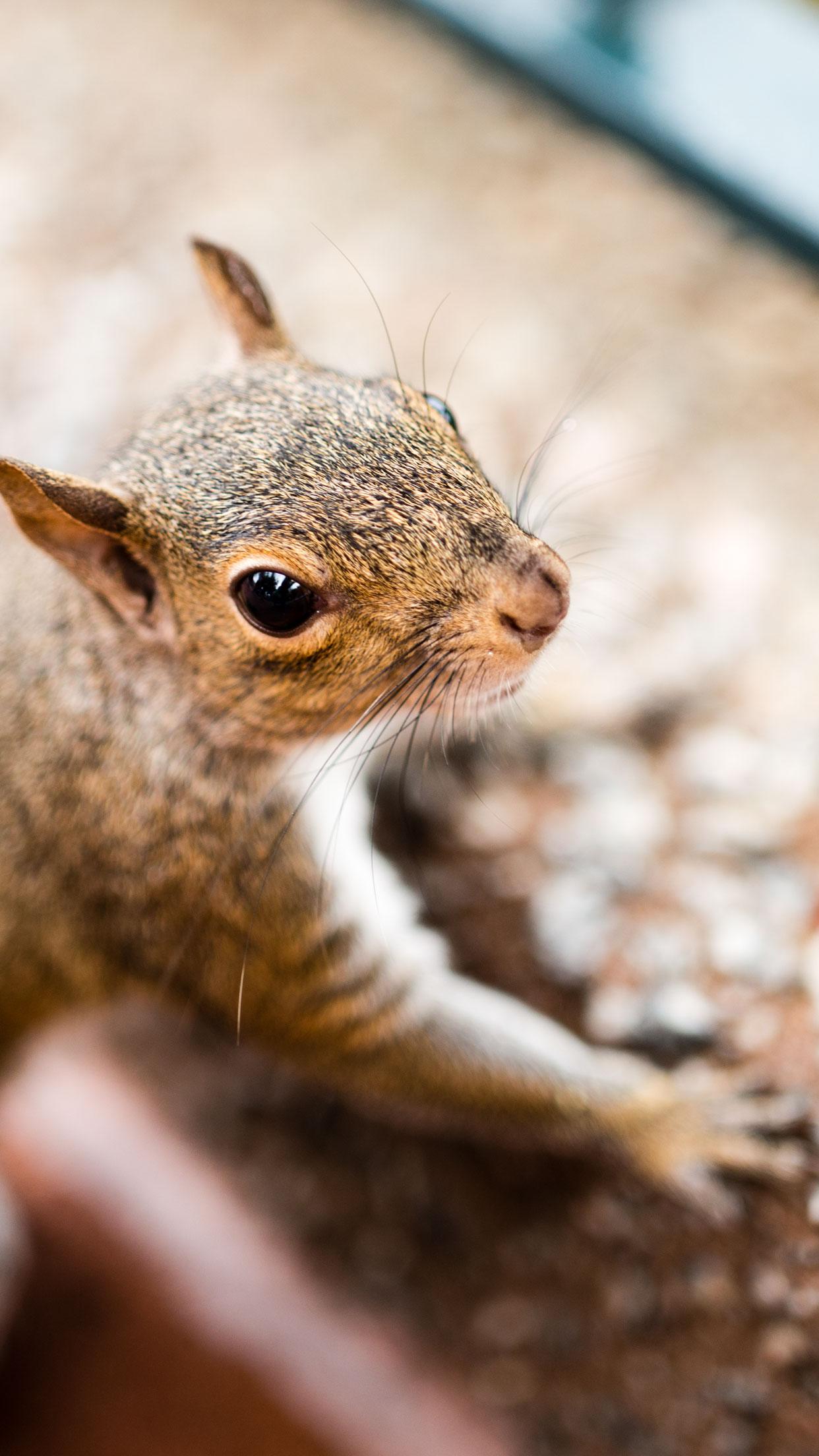 Epcot Squirrel