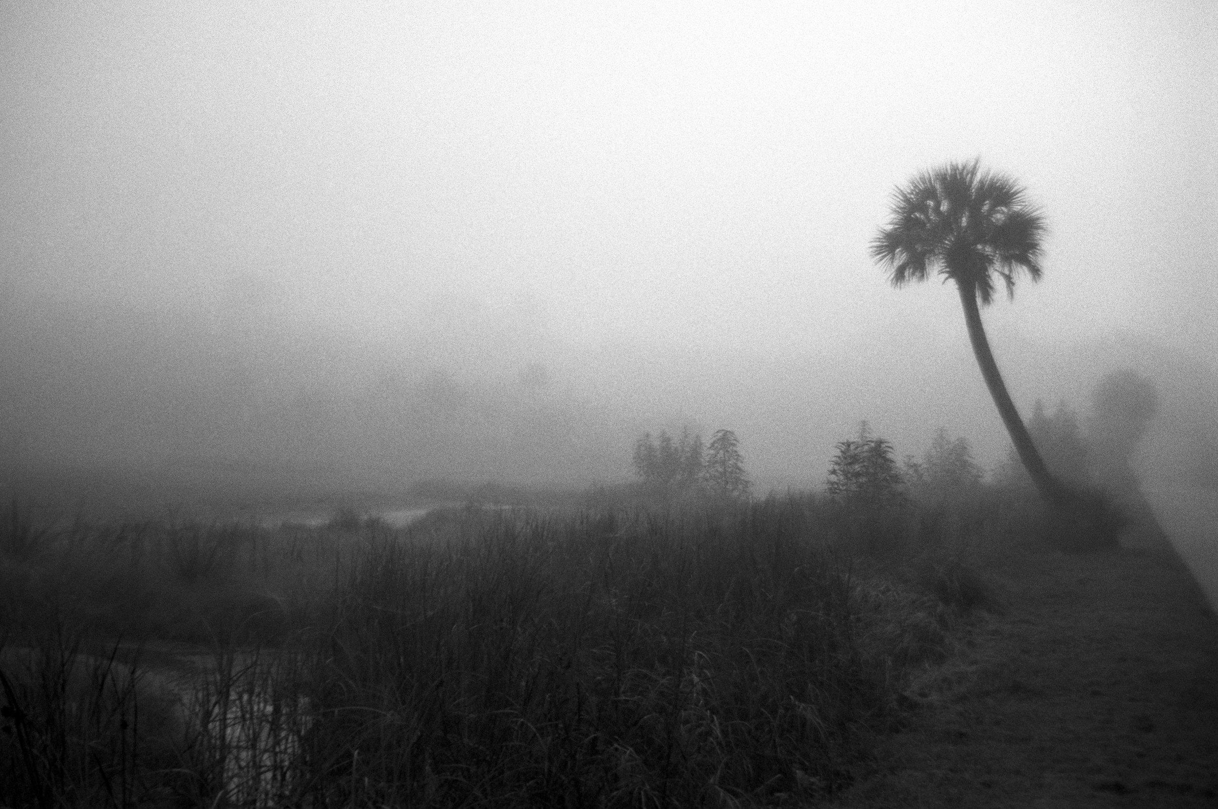 Marshy-fog2_BW.jpg