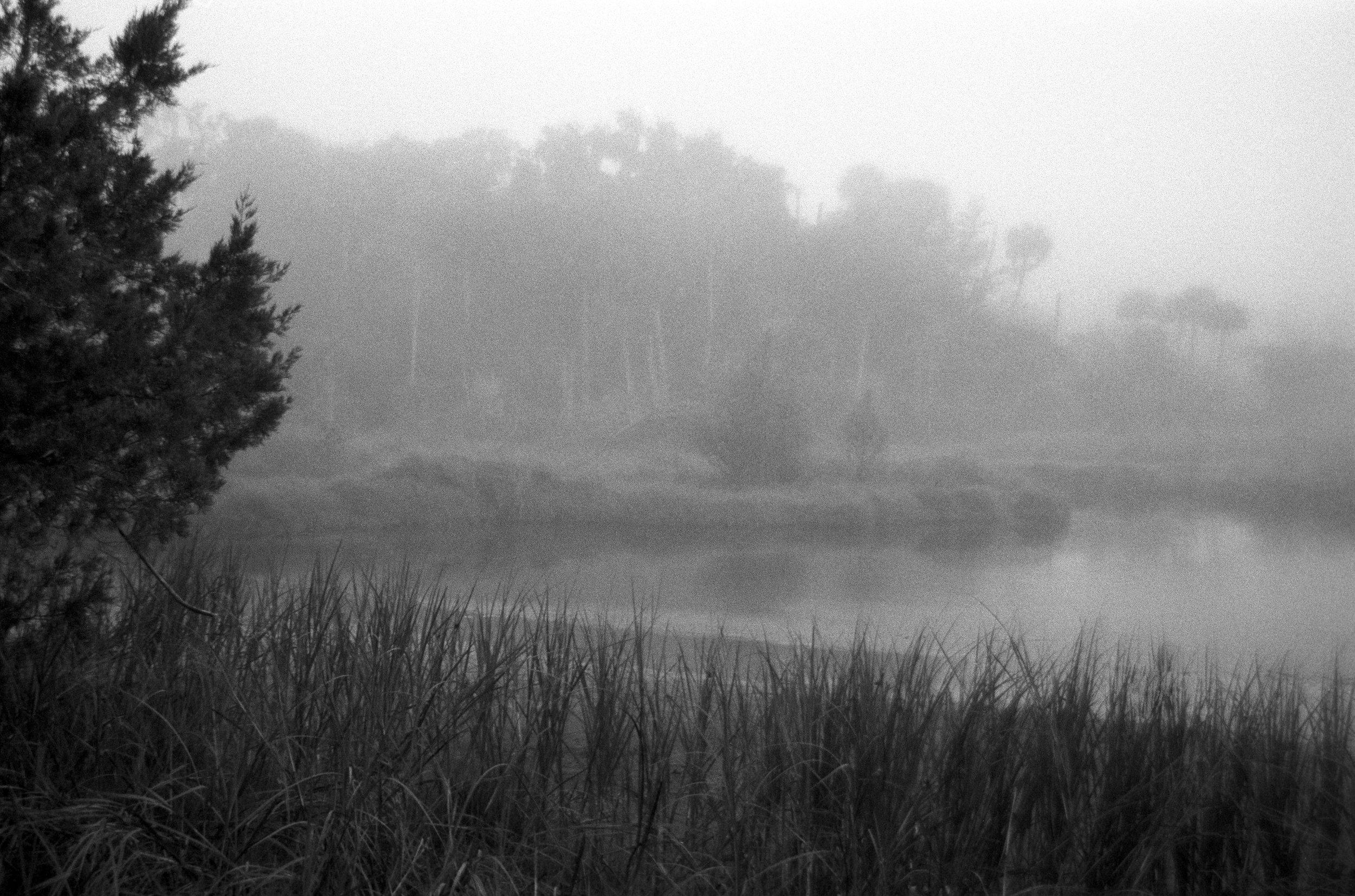 Marshy-fog4_BW.jpg