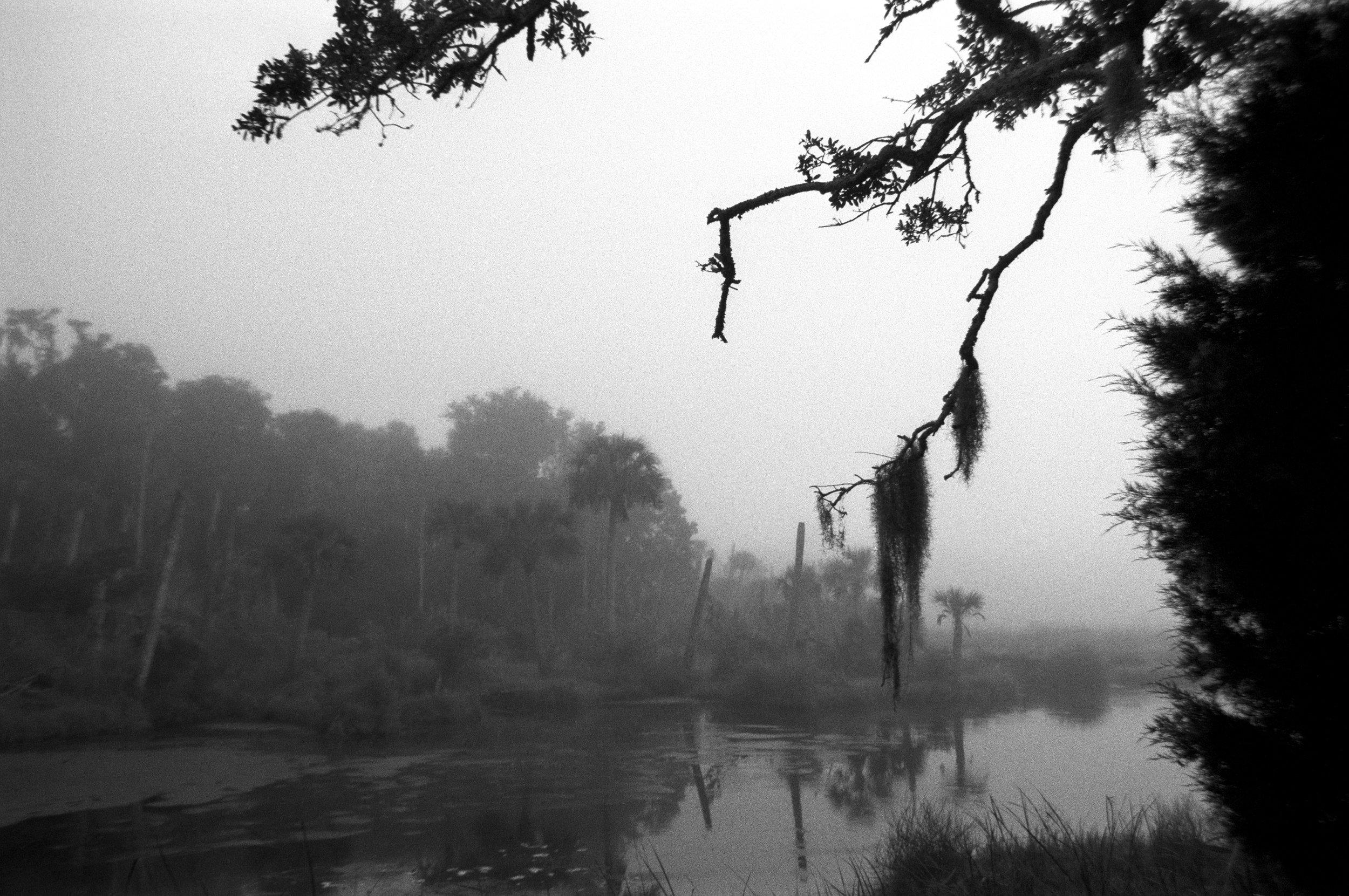 Marshy-fog11_BW.jpg