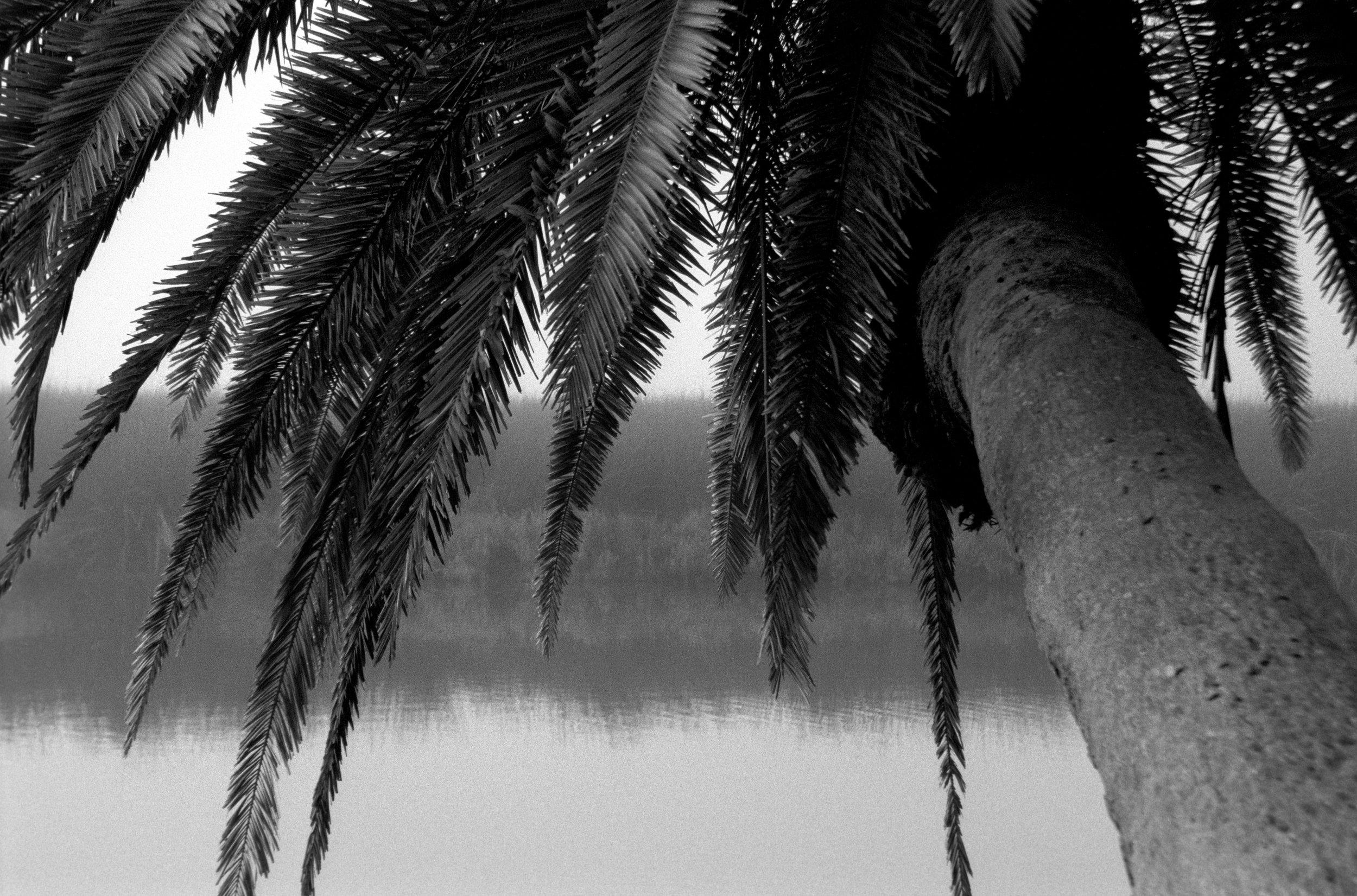 Marshy-fog16_BW.jpg