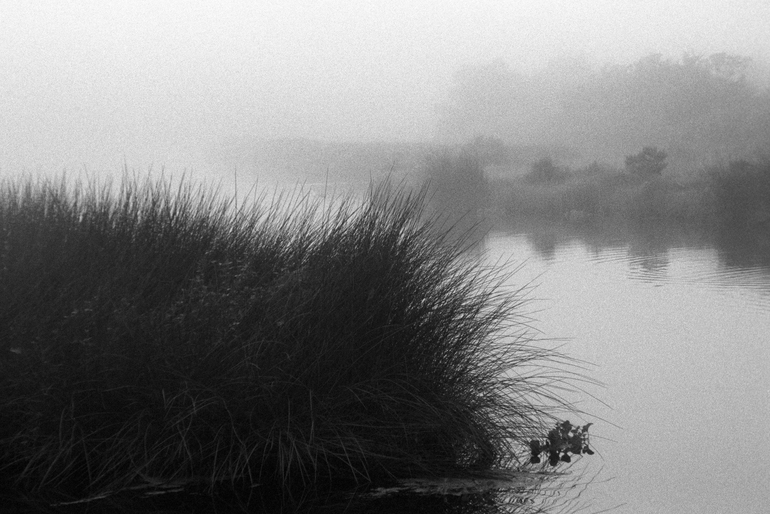 Marshy-fog22_BW.jpg