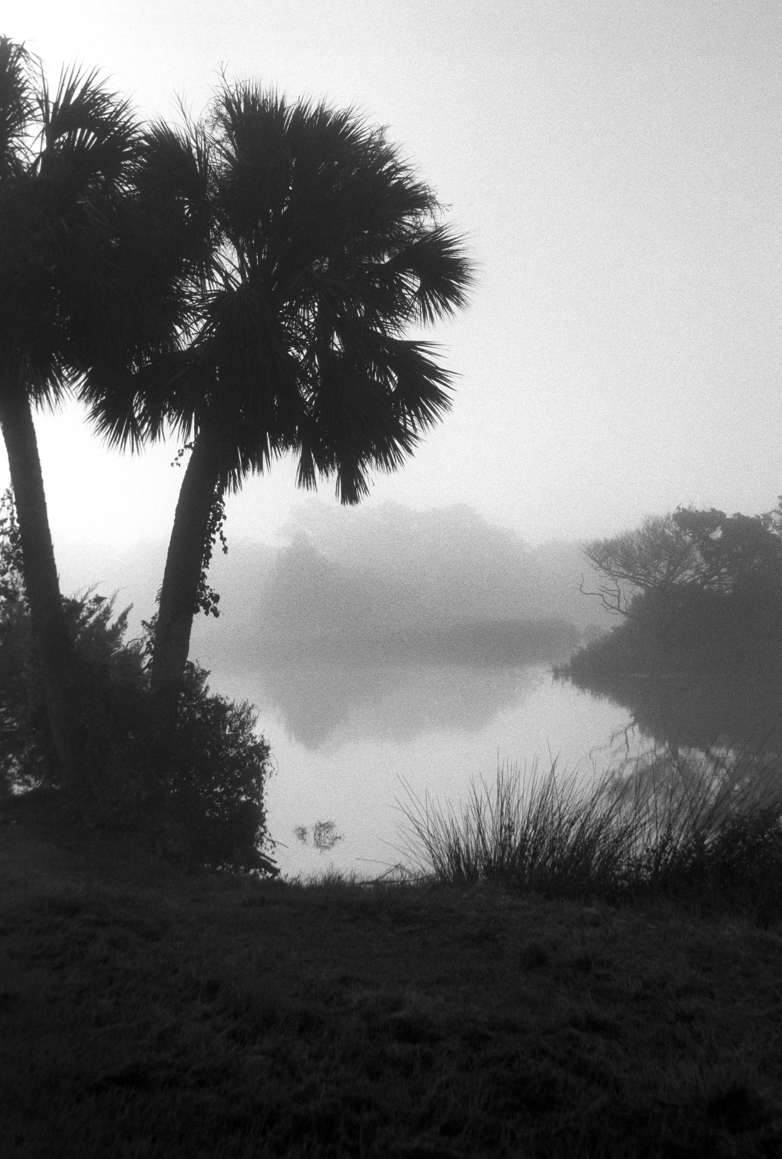 Marshy-fog23_BW.jpg