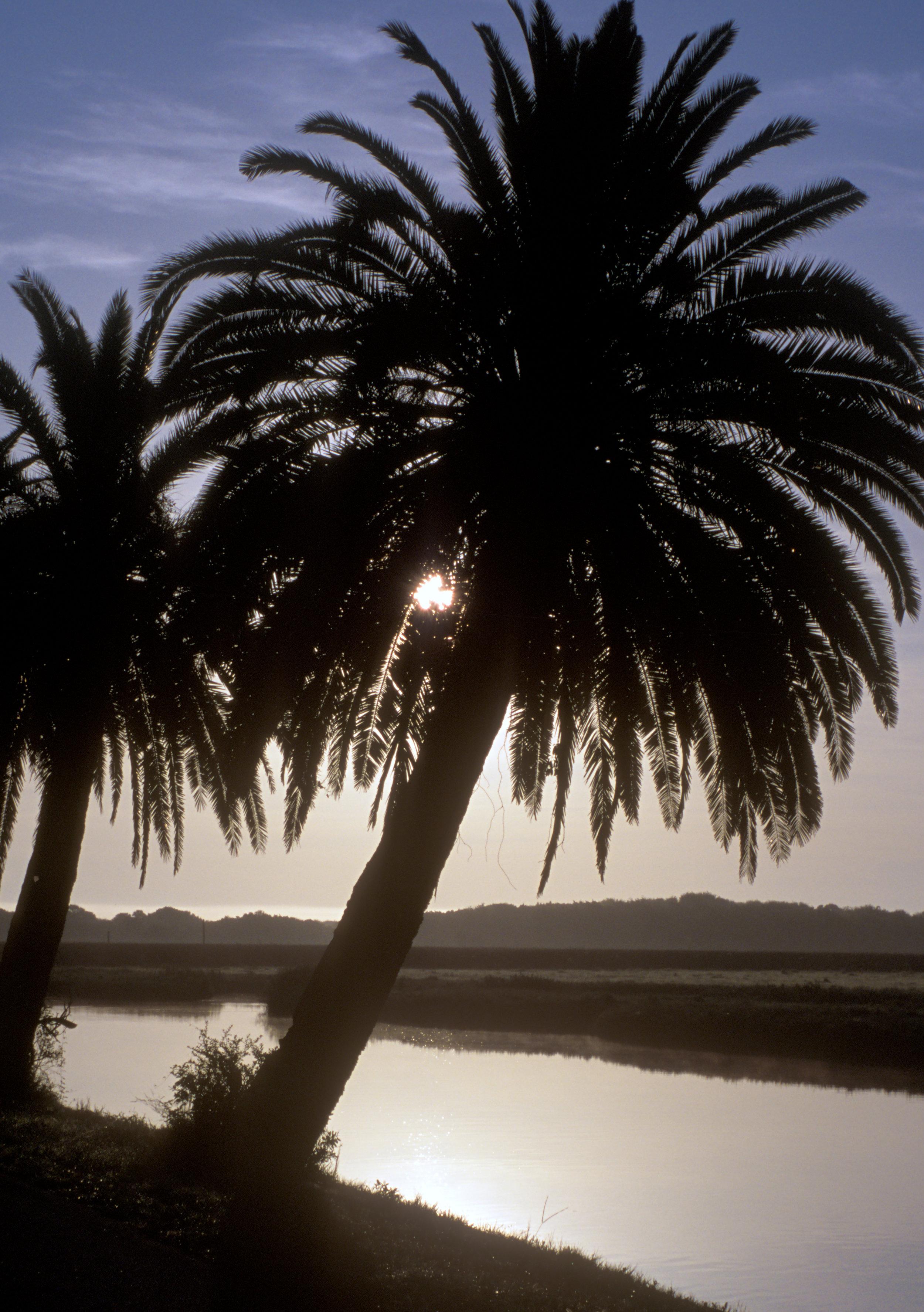 Florida5.jpg