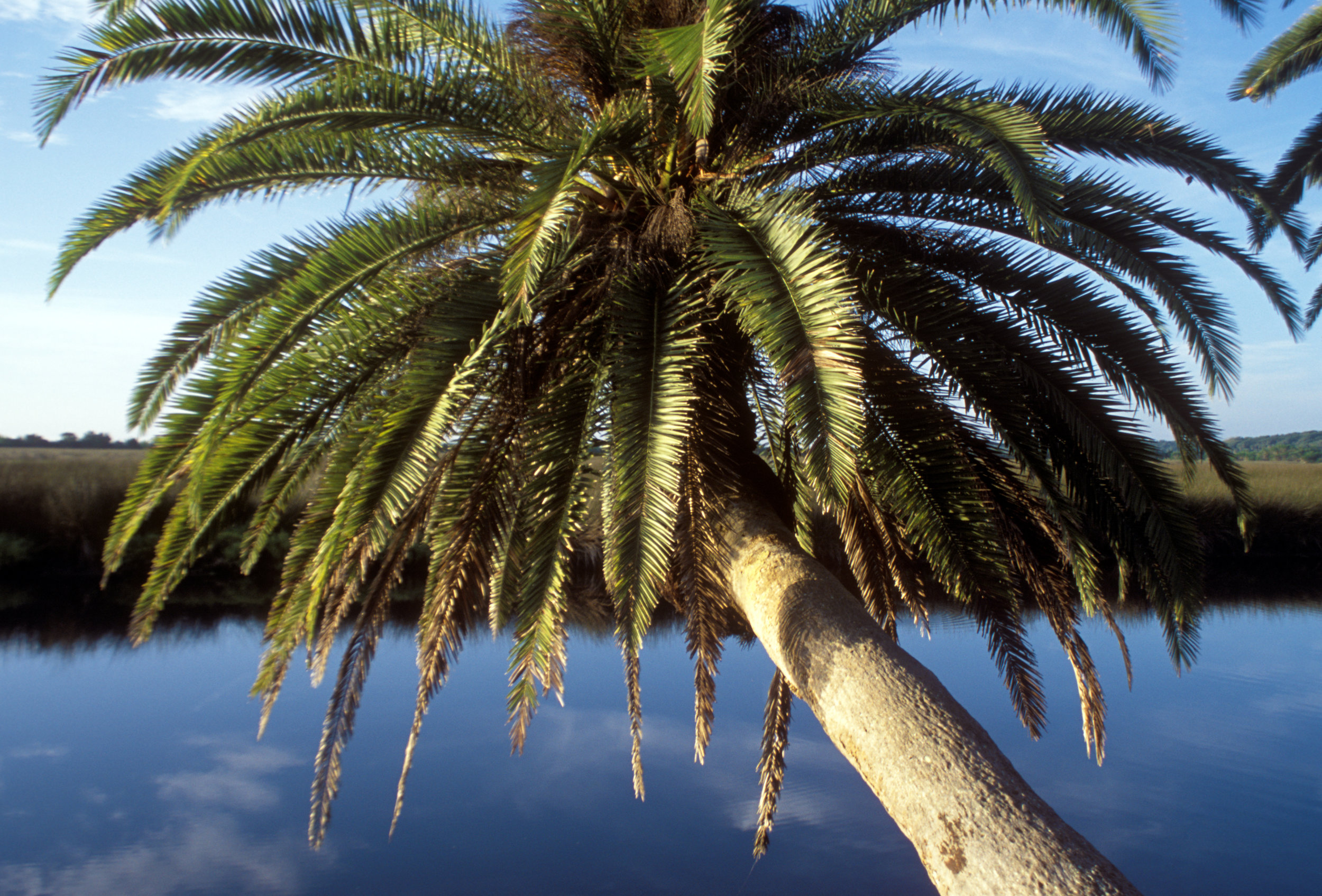 Florida2.jpg