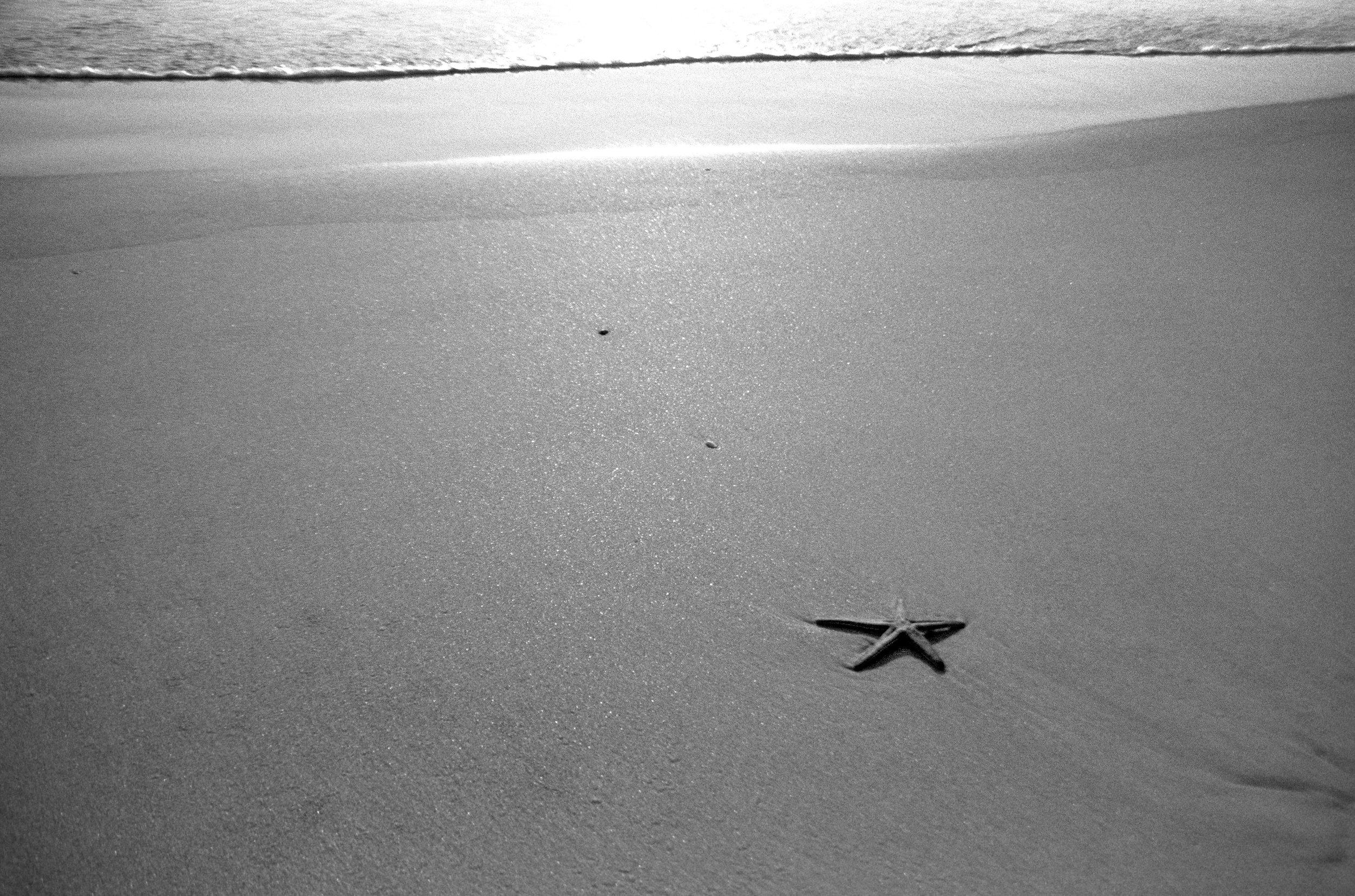 Starfish_Turtle2_BW.jpg