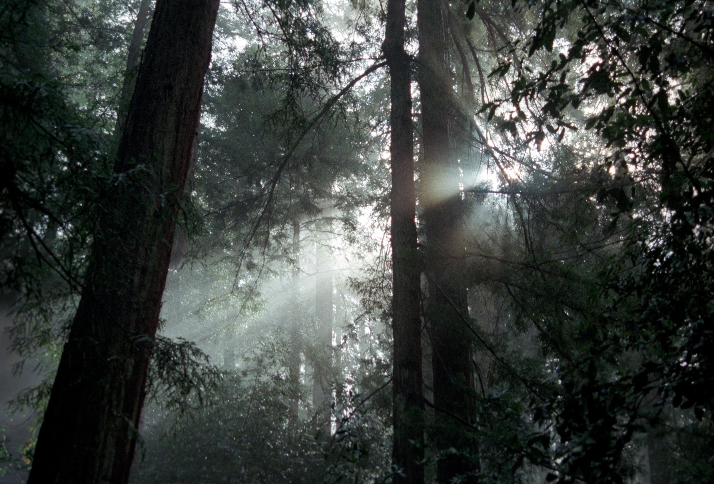 Light-through-tree1_Colour.jpg