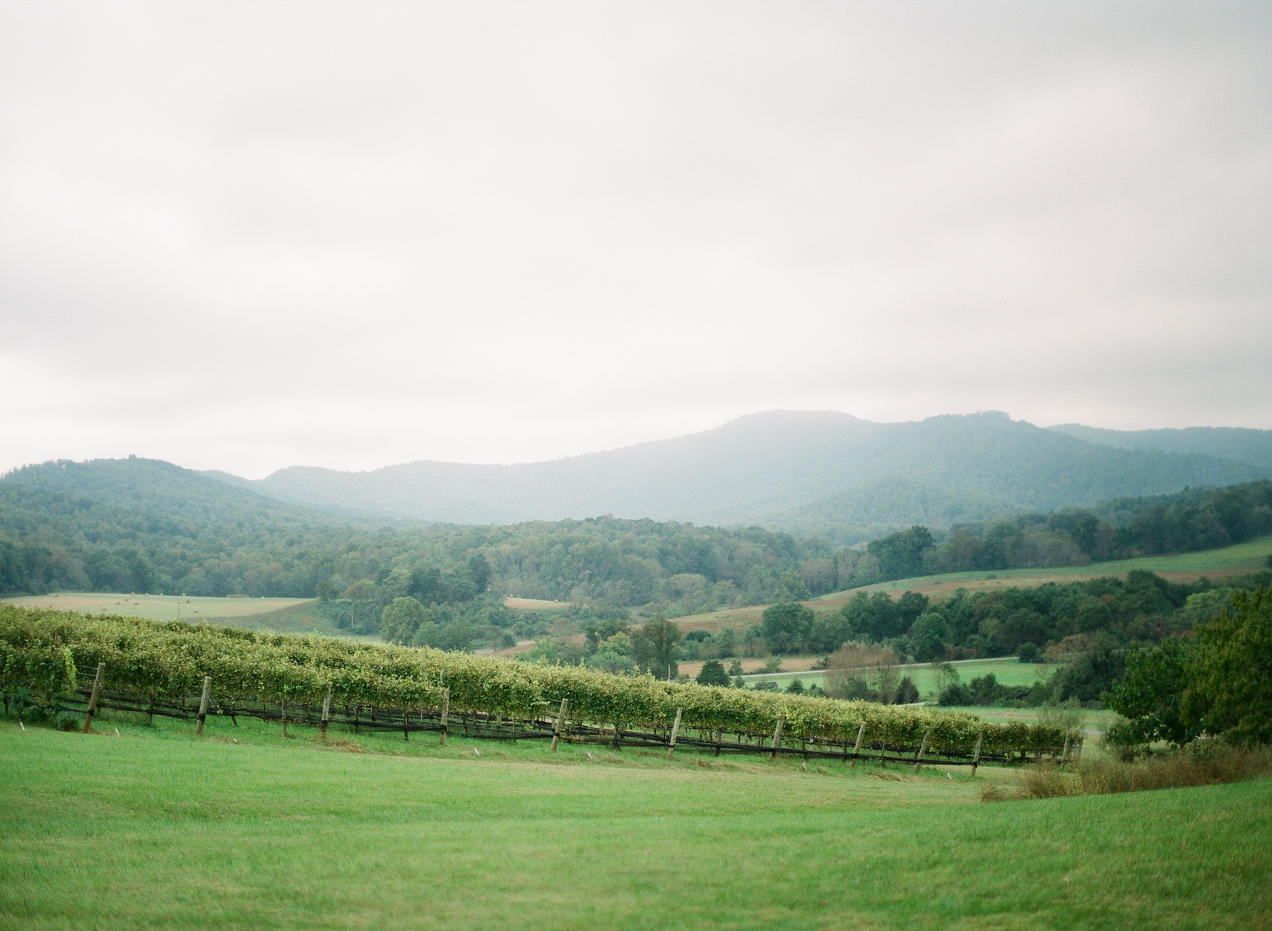 Pippin-Hill-Farm-and-Vinyards-Wedding-Film-Photography-23.jpg