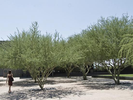 MYD-blog-museum-courtyard-arizona-550px.jpg
