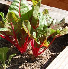 edible-garden.jpg