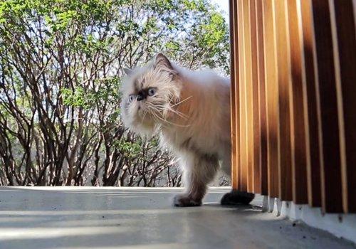 toblerone-house-cat.jpeg