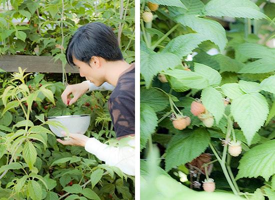 MYD-blog-washington-state-yellow-raspberries-550x400.jpg