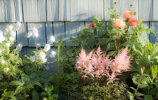 MYD-blog-Sequim-flowers-in-bloom-550x350.jpg