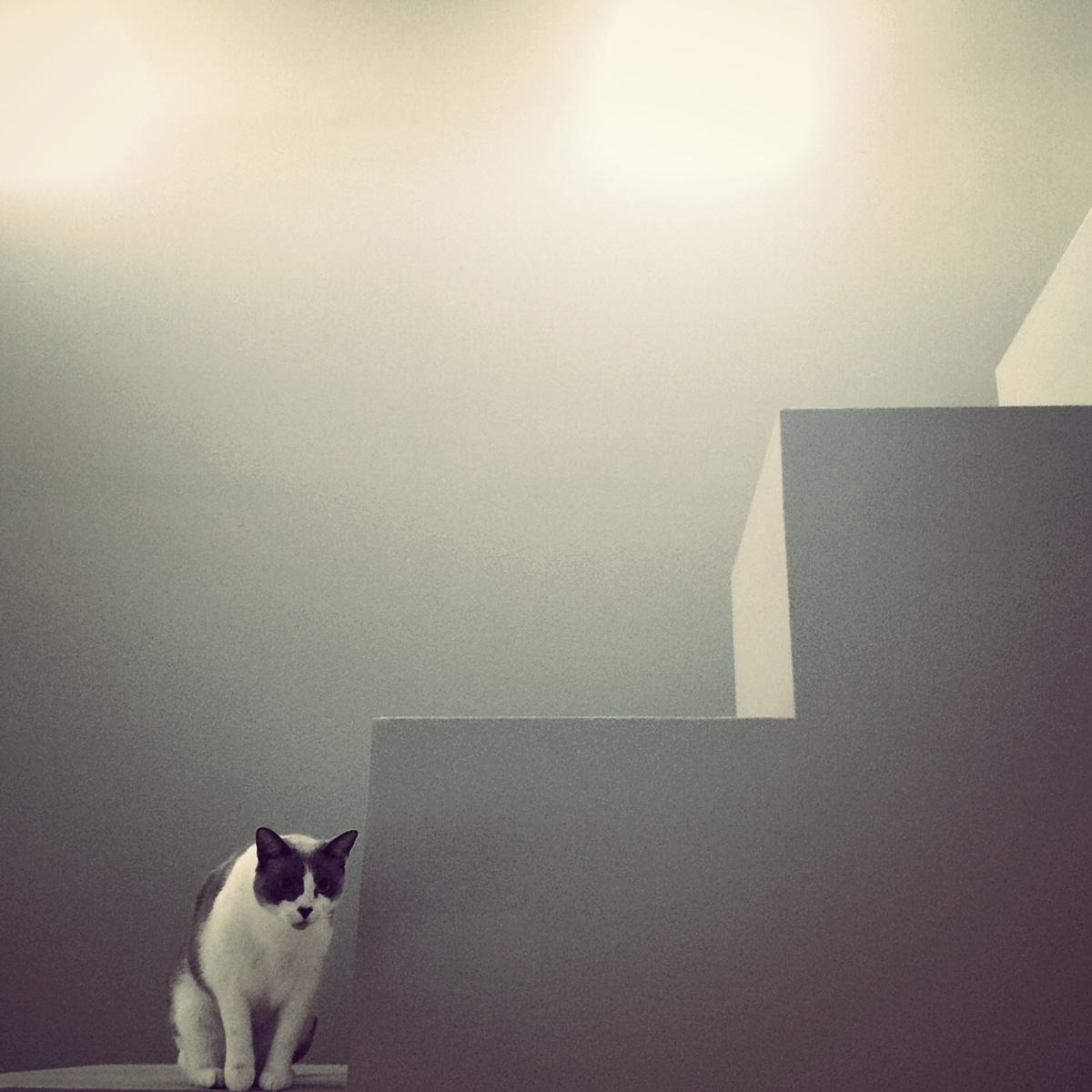 archi-cat  / lulu on the ledge