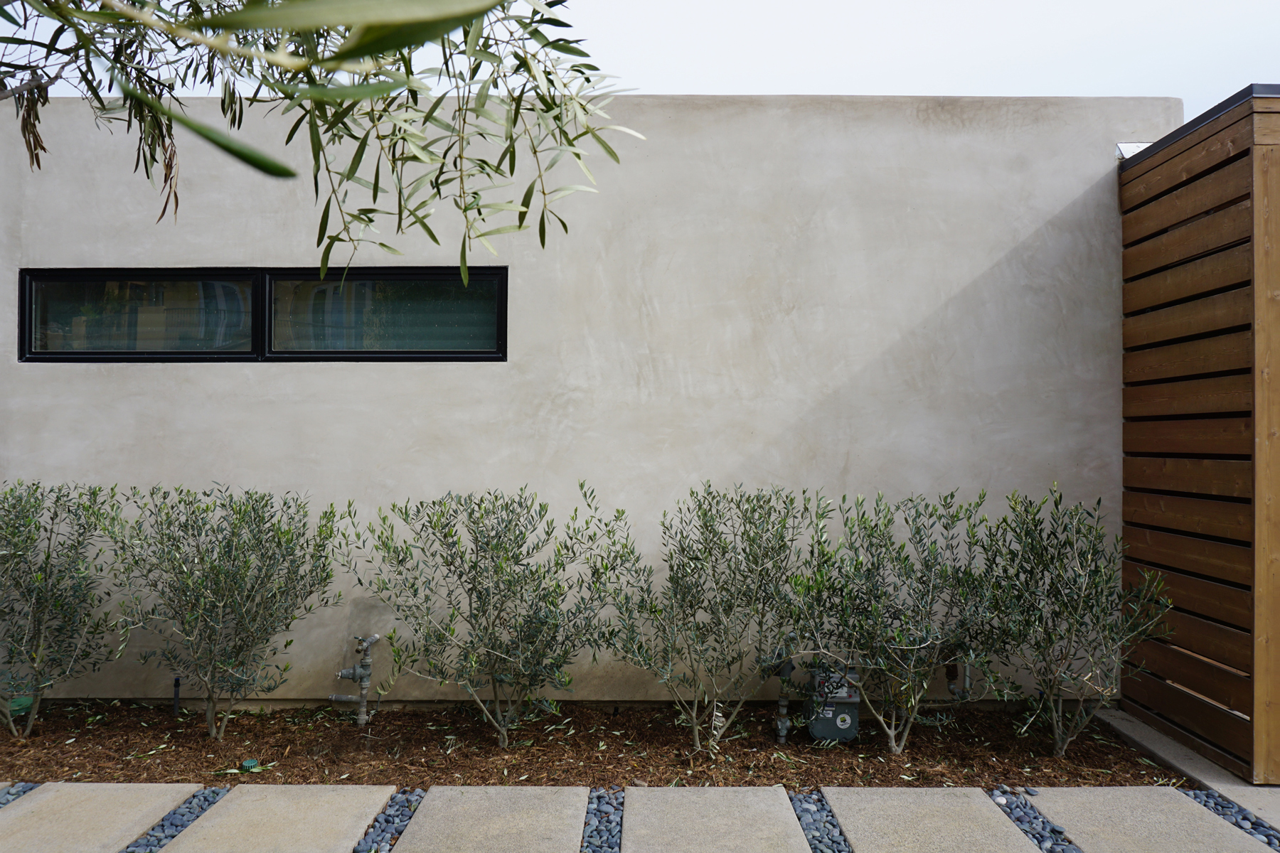 midcentury modern landscape at sideyard / laguna niguel, ca