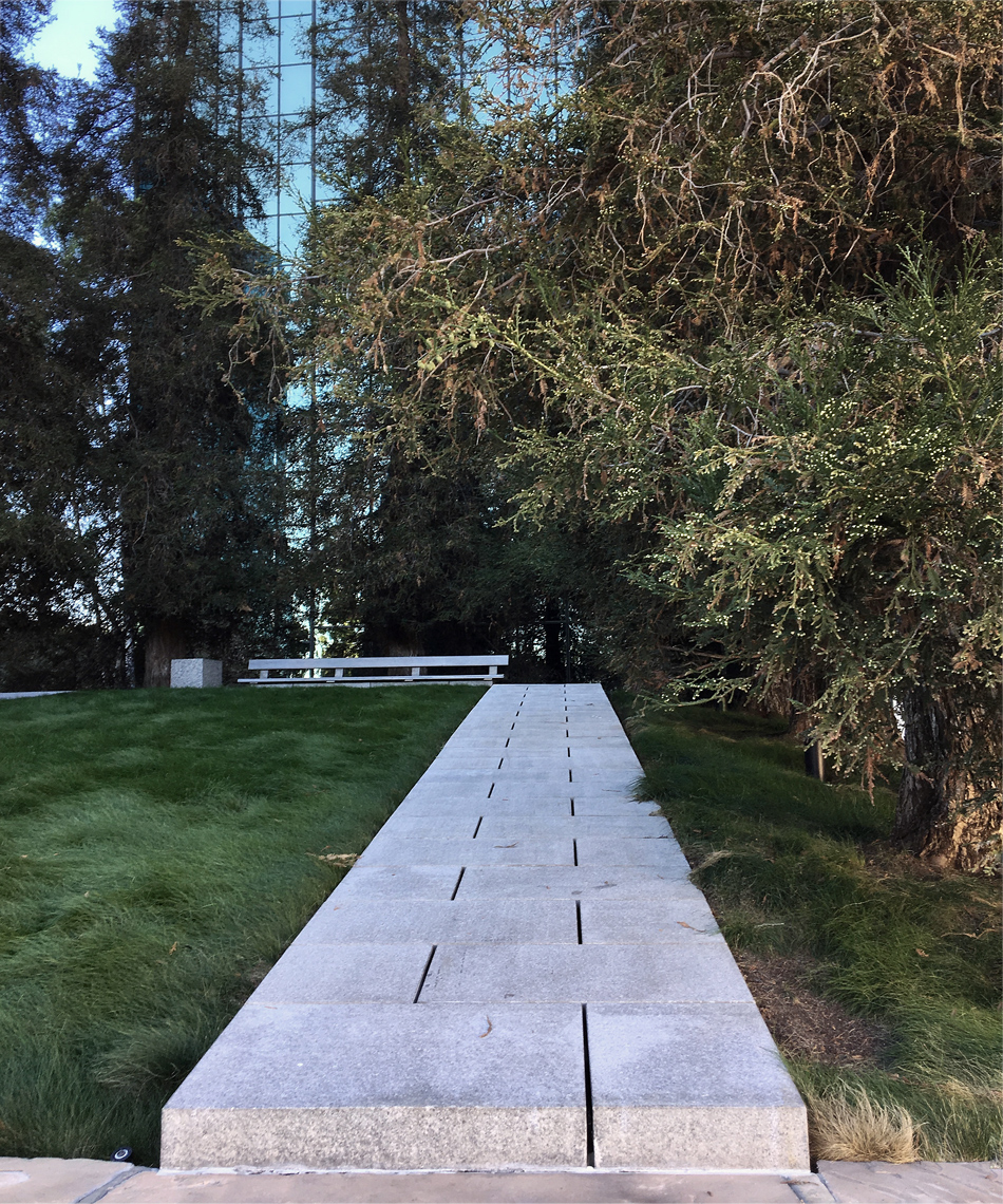 california scenario  /  forest walk  detail