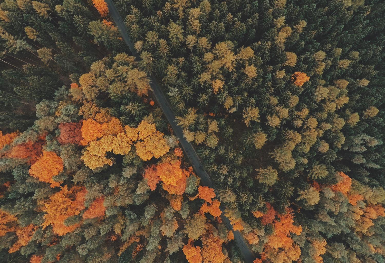 1500 trees.jpg