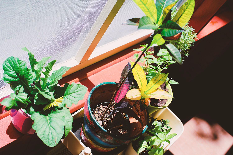 local plants.jpg