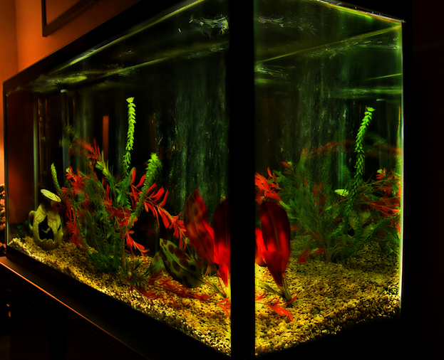 Monitoring water levels in aquariums is all the more important in a concentrated setting.