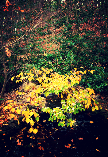 Fall colors may create a beautiful setting for your koi pond, but they also make for a big mess to clean up!