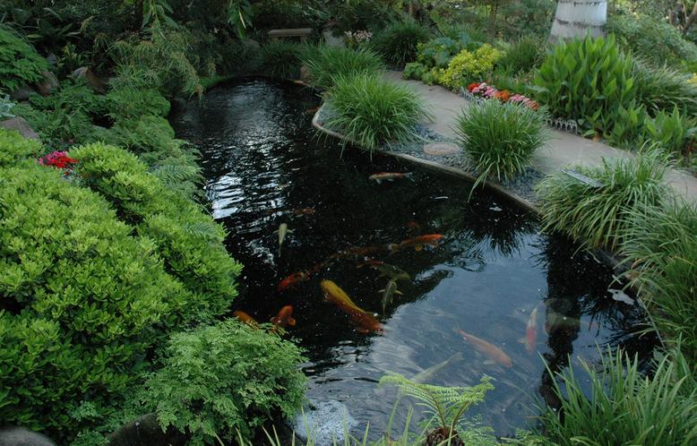 Natural lighting benefits both koi and pond plants in indoor ponds.