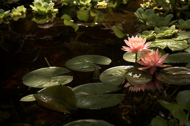 What's below the surface of your pond?