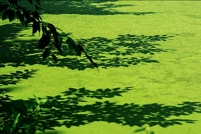 Algae accumulates easily in the sun, making for extra work in the summer.