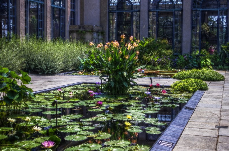 Summer is peak season for the pond, and also a time for you to keep on top of cleanings.