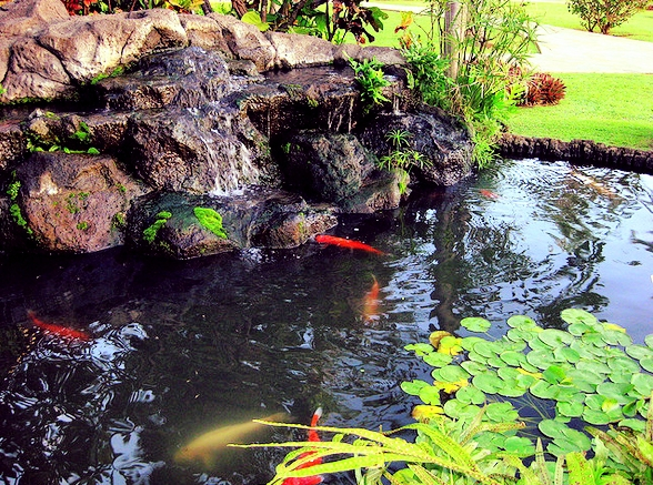 Waterfalls reduce the risk of disease in koi and help fight off algae.