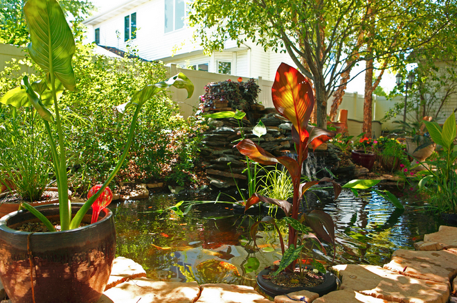 Greenery makes any koi pond come alive.
