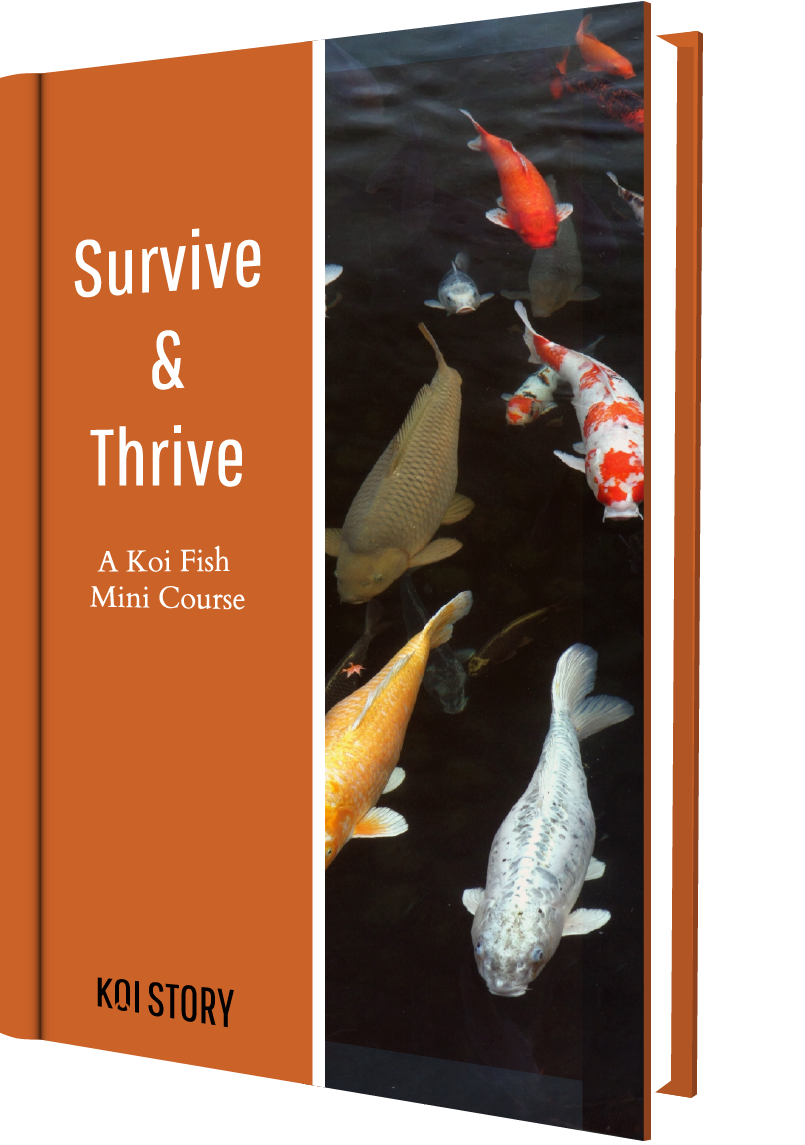 Koi Story eBook Cover - Survive and Thrive Mini Course.png