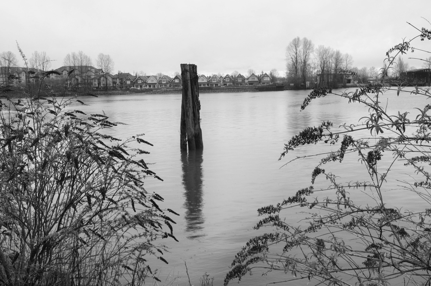 The Fraser River at New Westminster, BC  Click image to enlarge.