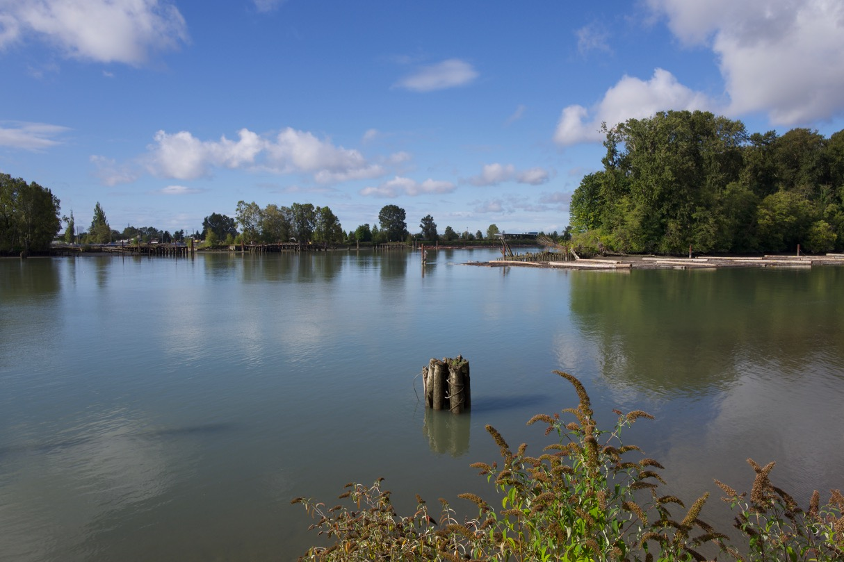 The Fraser River with Poplar Island on the right at New Westminster, B.C.  Remnants of old shipyard ways are shown at the tip of the island. Ships were built on Poplar Island during World War I and launched into the river at the eastern tip.