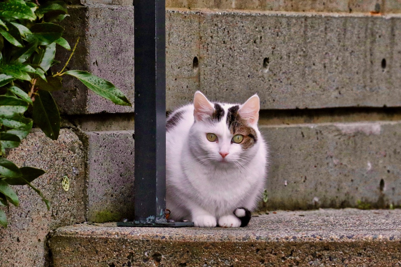 Cat at New Westminster Quay.  Click image to enlarge.