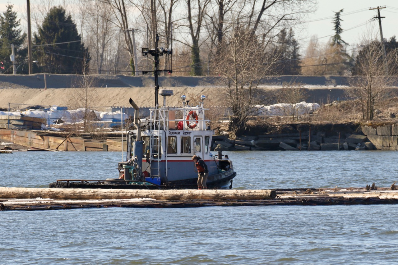 """Crew of Quadrant Towing tugboat """"QUADRANT RECRUIT"""" works with log boom in Fraser River."""
