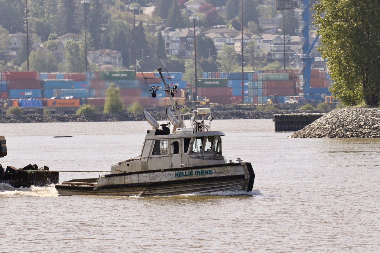 "Forrest Marine Ltd. tugboat ""NELLIE IRENE"" in Fraser River"